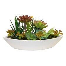Desktop Succulent Garden