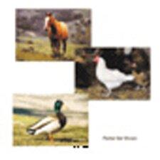 Farm Animal Poster Set (Set of 10)