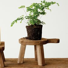 Casual Country Plant Stand