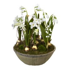 Mixed Flower in a Pot