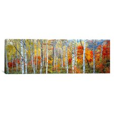 'Fall Trees, Shinhodaka, Gifu, Japan' Photographic Print on Canvas