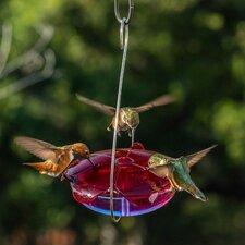 Ruby Sipper® Hanging Hummingbird Feeder