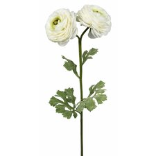 Single Ranunculus Flower Stem