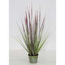 Bamboo Grass in Pot