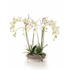 Orchids Floral Arrangements in Glass Bowl