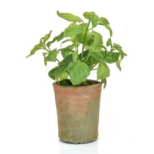 Potted Herb Tree in Pot