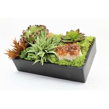 Assorted Succulents Desk Top Plant in Container