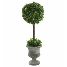 Boxwood Foliage Topiary in Urn