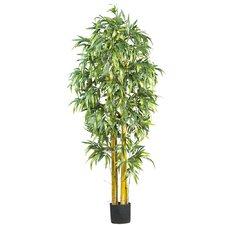 Big Bamboo Tree in Pot
