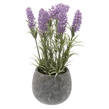 Rystic Lavender Flowering Plant in Pot