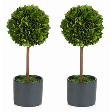 Single Ball Preserved Boxwood Topiary in Pot (Set of 2)