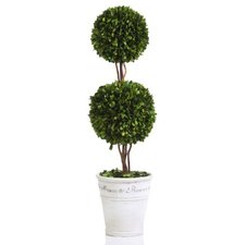 Maison de Provence Potted Double Ball Boxwood Topiary in Pot