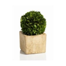 Carina Preserved Boxwood Topiary in Pot