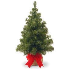 "24"" Green Spruce Trees Freshly Cut Christmas Tree"
