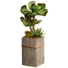 indoor plants you ll love wayfair