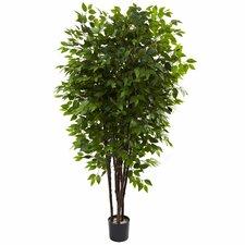 Deluxe Ficus Tree in Pot
