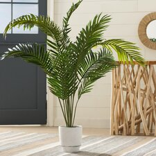 Black Hammock Palm Tree with Pot