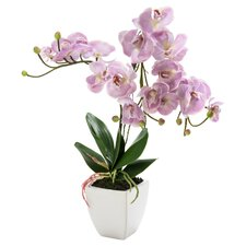 Faux Orchid Flower in Pot