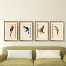 Luminous Parrots' by Sir William Jardine Framed Painting Print by W. King Ambler