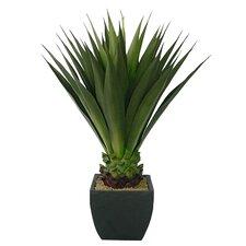 Realistic Giant Aloe Floor Plant in Pot