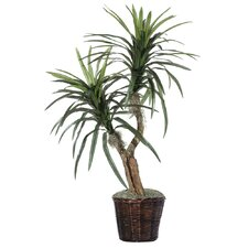 Deluxe Artificial Potted Natural Marginata Tree in Basket