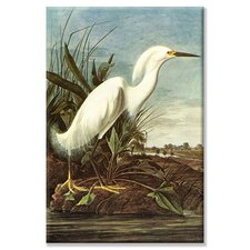 'Snowy Egret' by John Audubon Painting Print on Wrapped Canvas