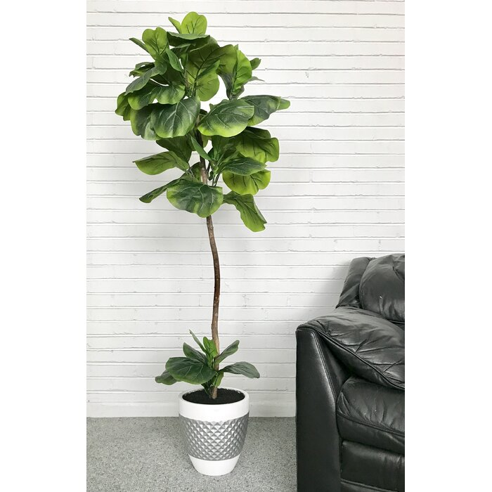Fiddle Leaf Fig Floor Palm Tree In Pot