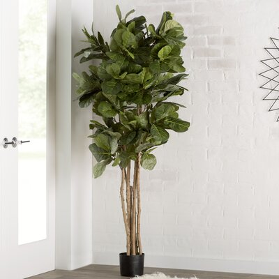 Captivating Brayden Studio Fiddle Leaf Fig Tree In Pot U0026 Reviews | Wayfair