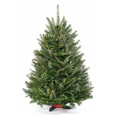 real christmas trees delivered 3 green fir freshly cut christmas tree with stand reviews wayfair - 3 Christmas Tree