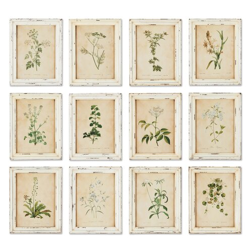 Wild Flower Botanical 12 Piece Framed Graphic Art Set