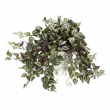 Wandering Jew Desk Top Plant in Planter