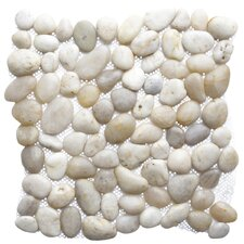 Crystal Shell Random Sized Natural Stone Pebble Tile in Gray