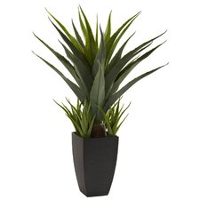 Agave Desk Top Plant in Decorative Vase