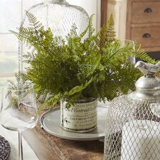 Bracken French Fern in Pot