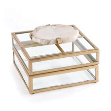 Fossilized Clam Glass Display Box