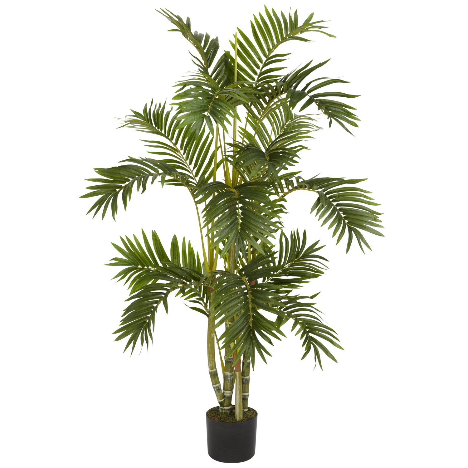 Nearly natural areca palm tree in pot reviews wayfair for Pictures of areca palm plants