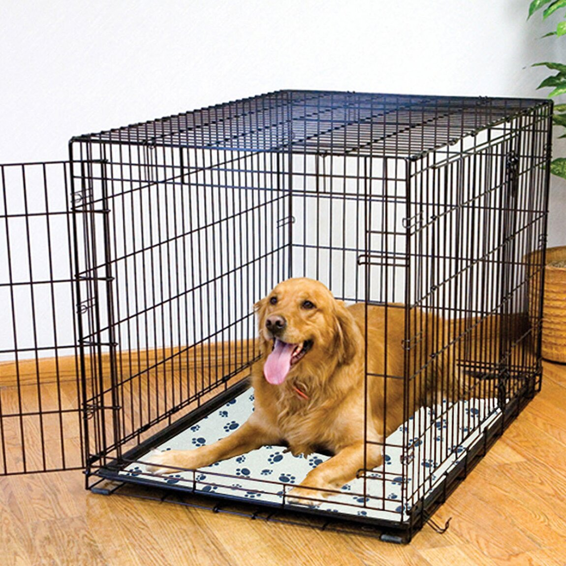 Master Paws Dog Kennel Reviews