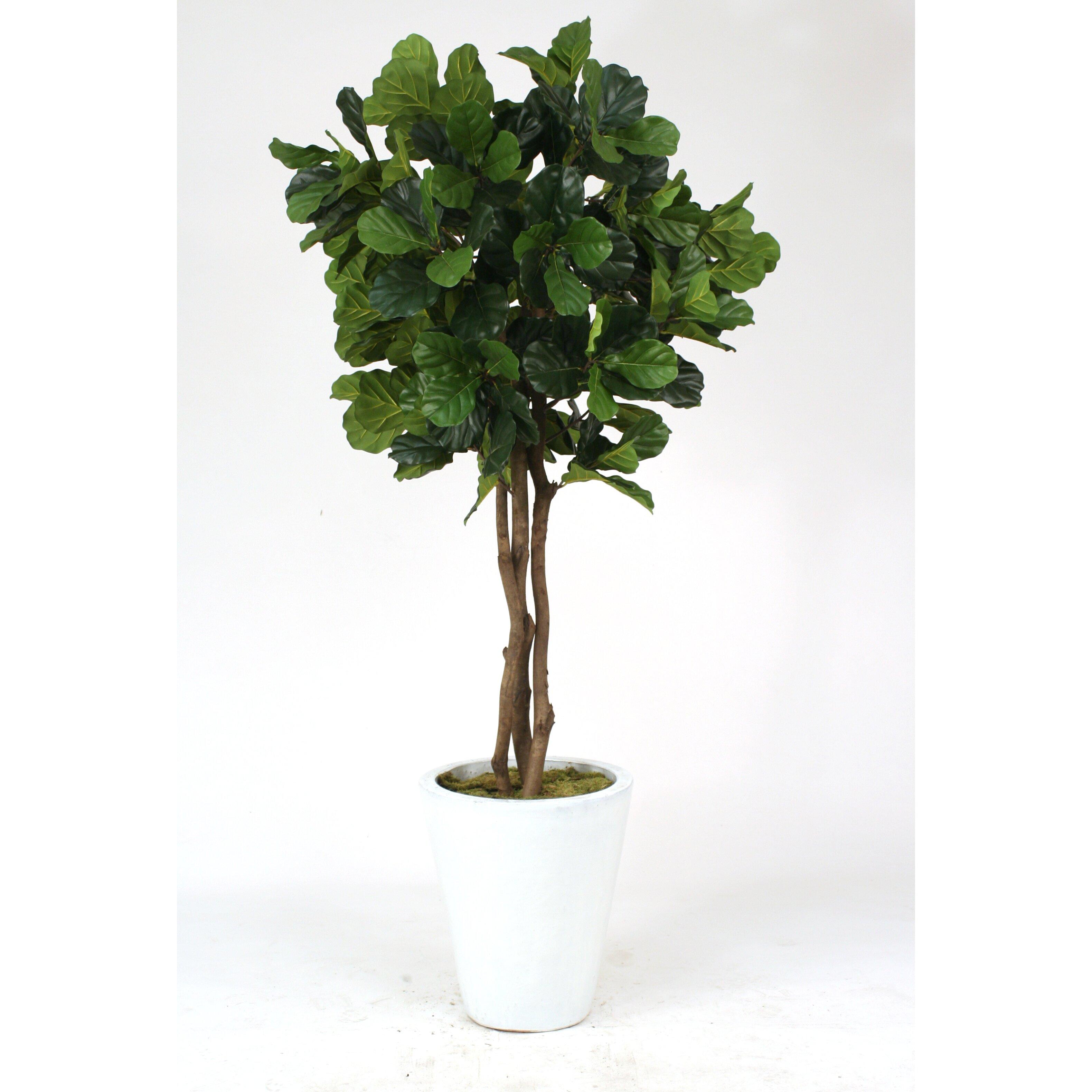 Distinctive Designs Fiddle Leaf Fig
