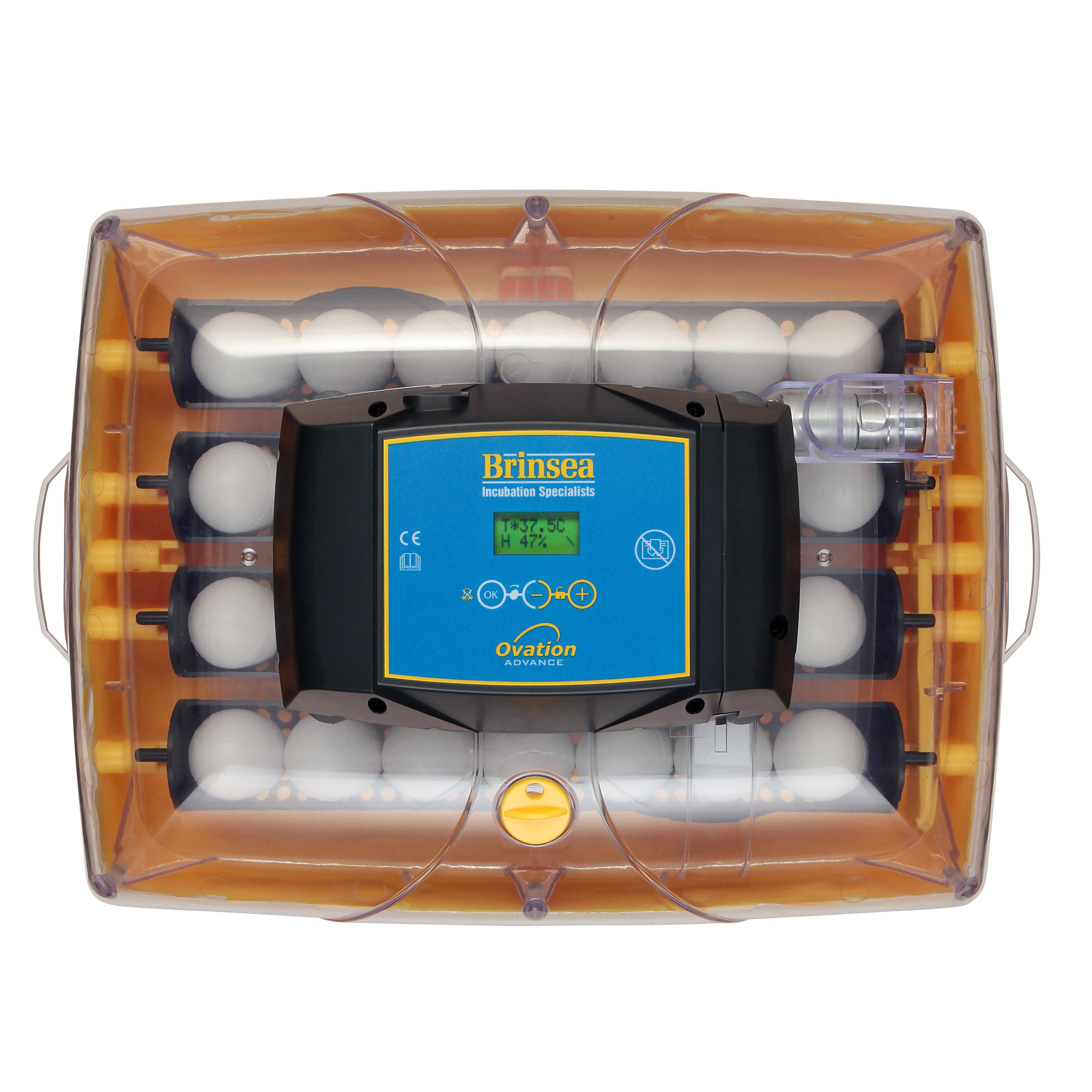 Cabinet Incubator Kit Brinsea Ovation 28 Advance Automatic Egg Incubator Wayfair