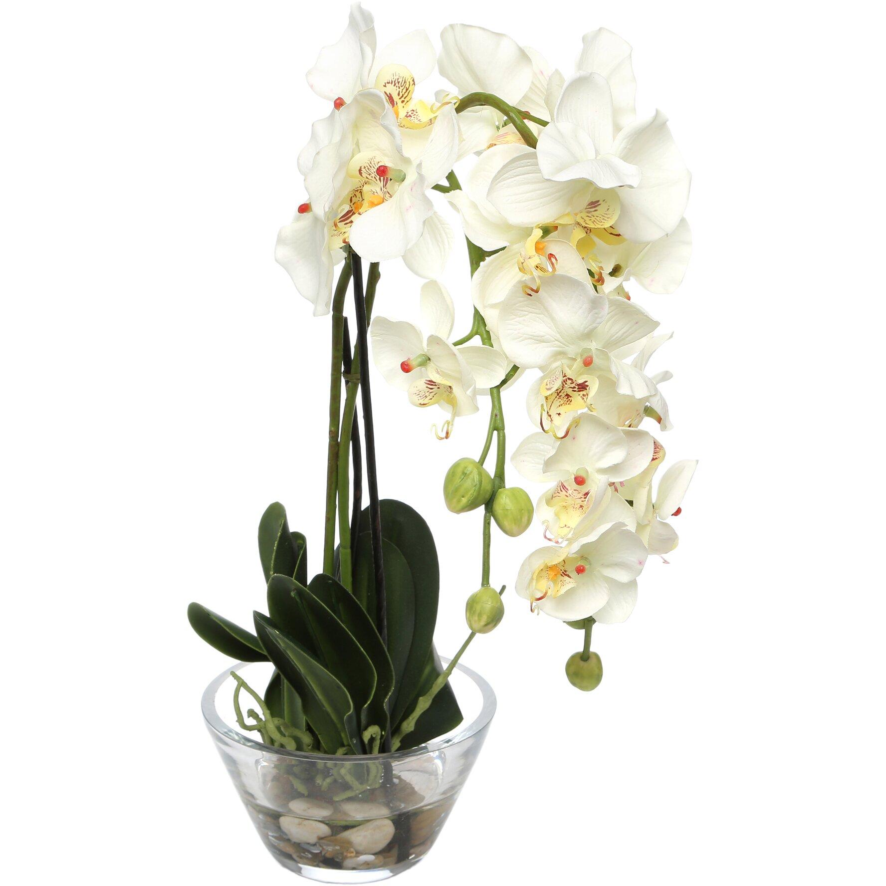 Phalaenopsis Silk White Orchid In Glass Vase Amp Reviews Allmodern