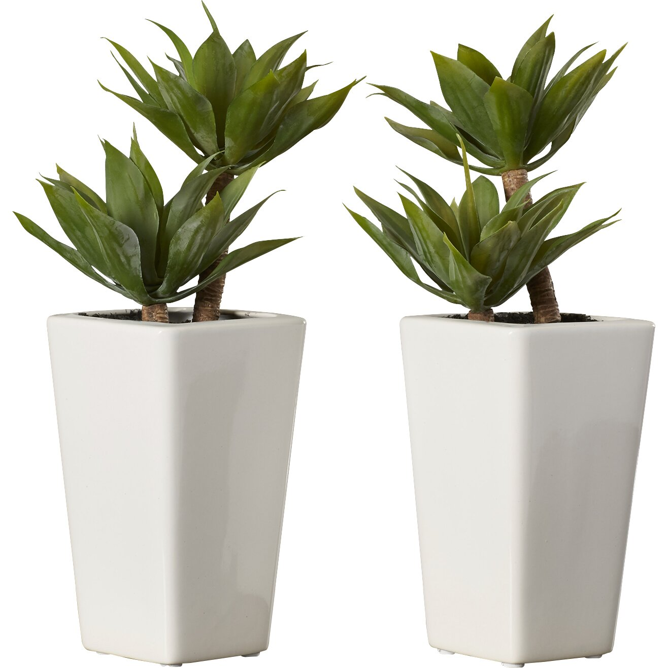 Mercury Row Mini Agave Desk Top Plant in Planter & Reviews