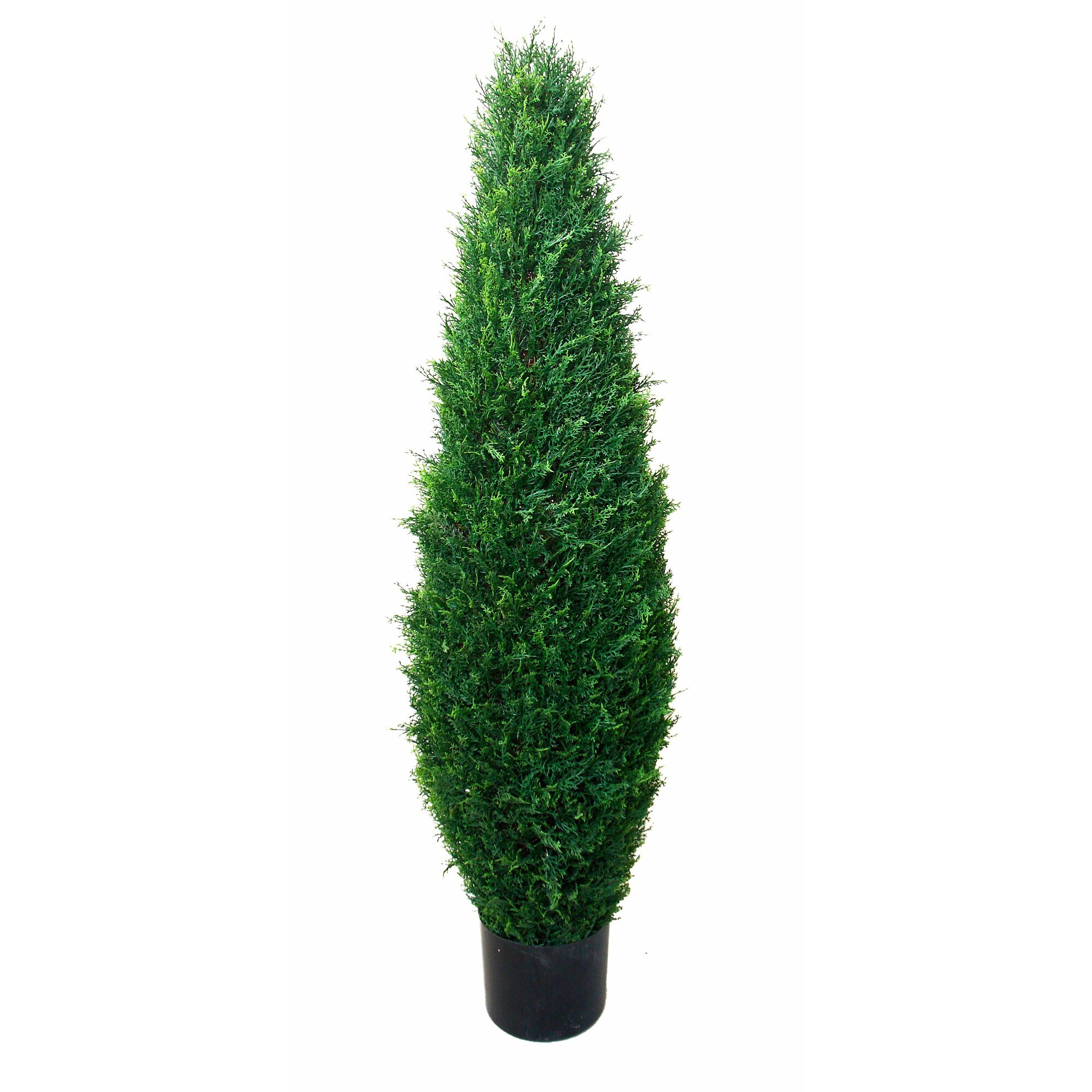 Decorative Indoor Trees Indoor Plants Youll Love Wayfair